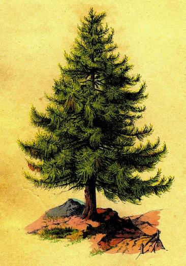 Why Winter Is The Best Time To Prune Your Pine